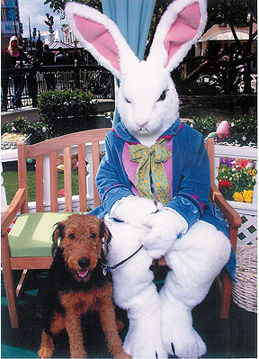 Bogart and the Easter Bunny