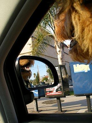 Bogart in the Car