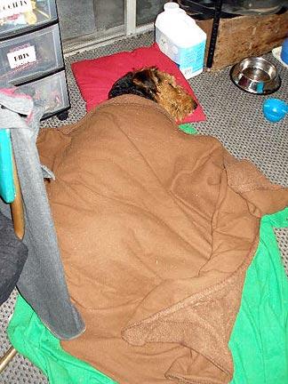Sleeping Bogie