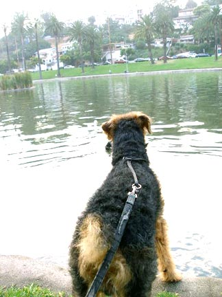 Bogie By Echo Park Lake