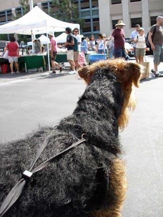 Bogart at the Flea Market