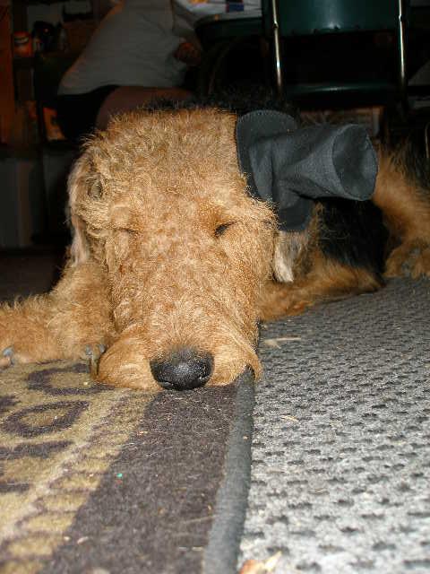 Bogart on Halloween