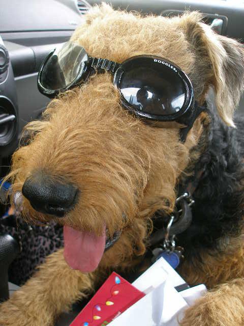 Bogart Doggles