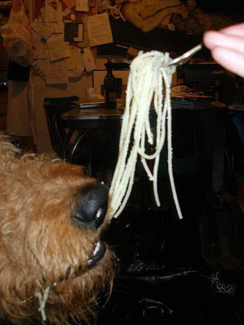 Airedale Spaghetti