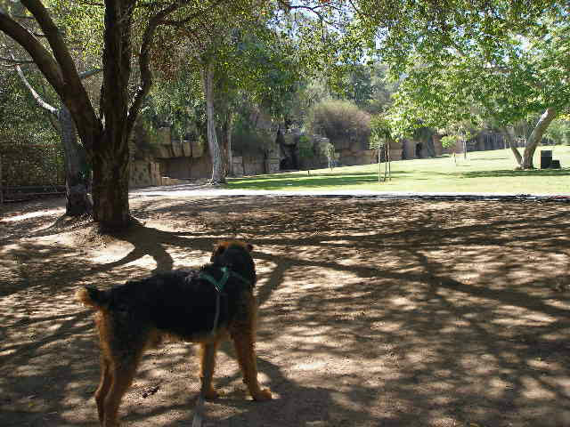 Bogart in Griffith Park