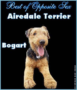 Bogart Best in Show Myspace