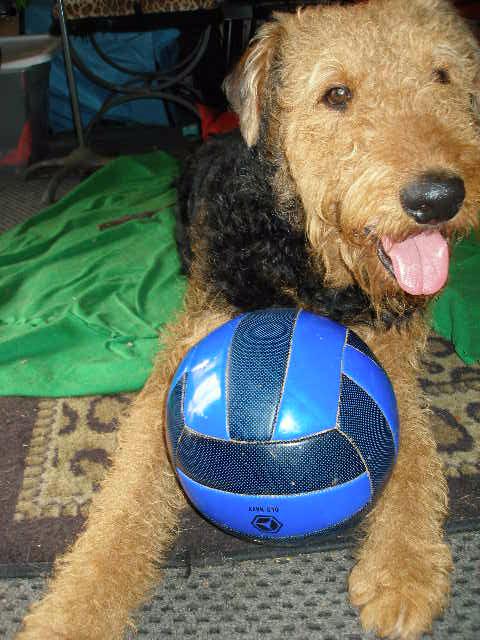 Bogart Soccer