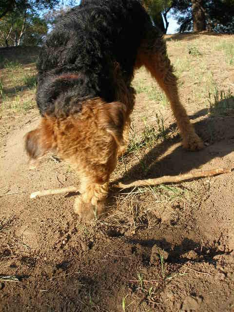 Bogart Stick Work