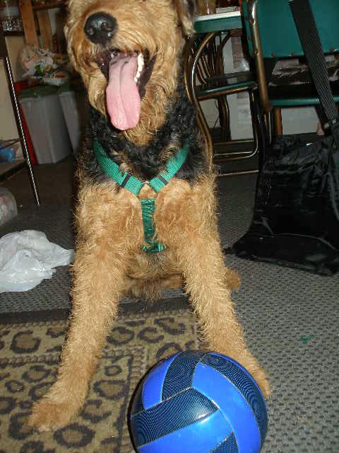 Bogart gets his ball back