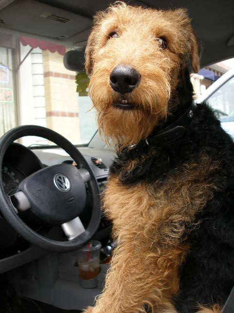 Driving Mr. Bogie