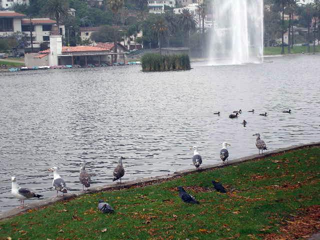 Bogart at Echo Park Lake