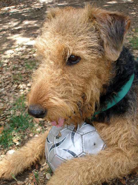Bogart's New Soccer Ball