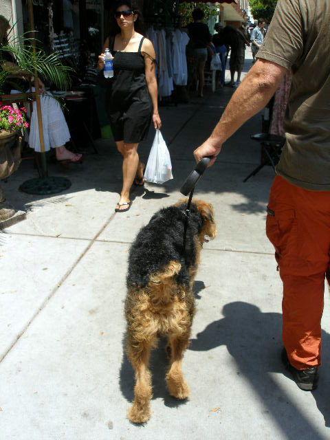 Bogart in Larchmont Village