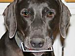 Vick Card Dog