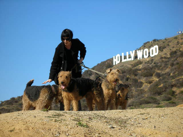 Airedale Hollywood Trail