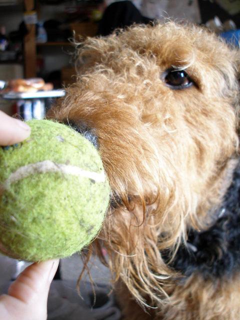 Super Tennis Ball