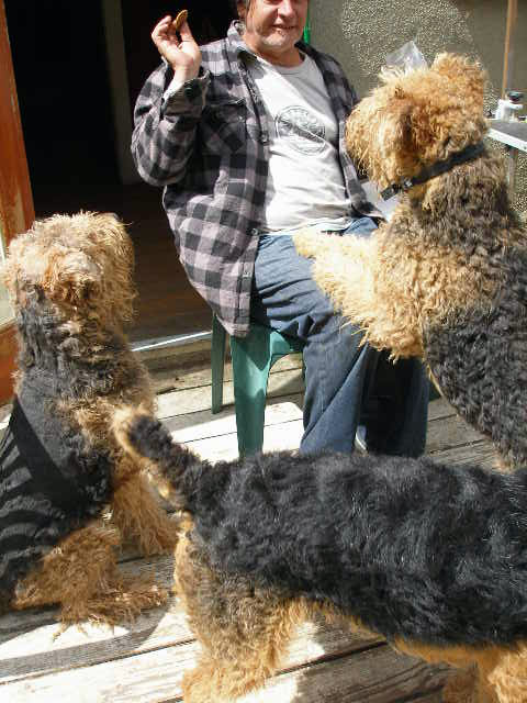 Airedale Treats