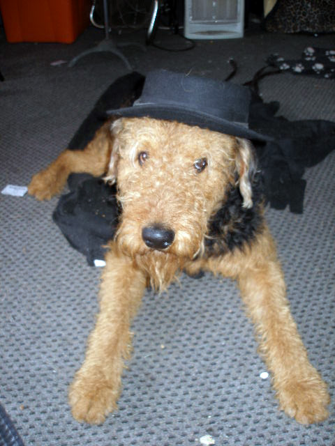 Airedale Feeling Good