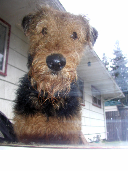 Airedale Yard
