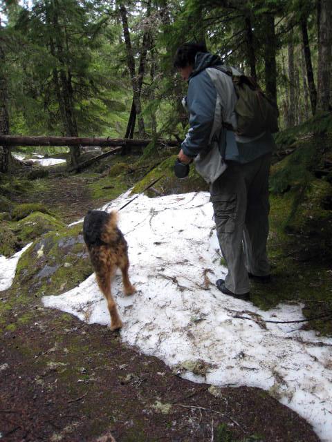 Mountain Man Bogart