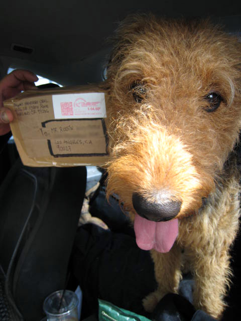 Airedale Terrier Saturday