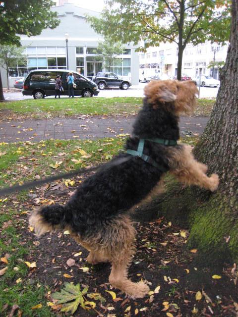 squirrelpatrol8