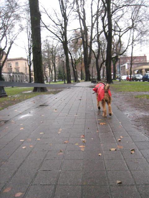 raincoat6